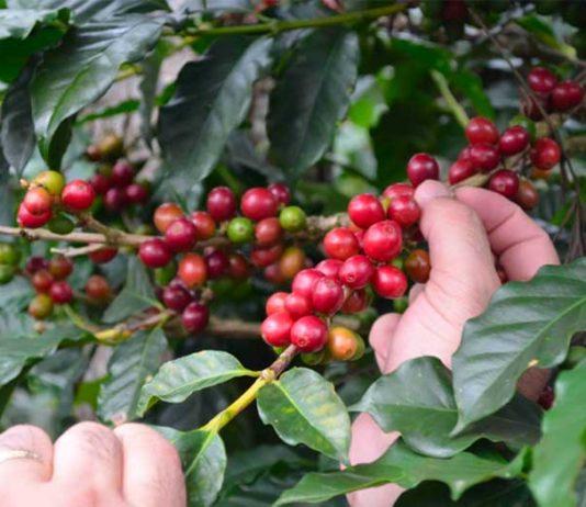 aa7d07277e Quotazione Caffè: prezzo oggi in tempo reale · business plan startup
